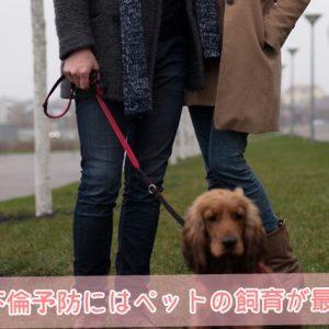 妻の不倫予防にはペットの飼育が最適